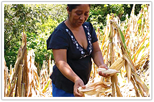 1357 - Santa Rosa Agriculture - Guatemala