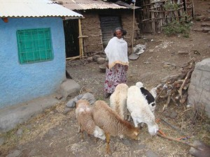 By raising sheep, marginalized women not only produce wool to sell at the market, but they have a steady supply of nutritious milk for their children, and they can afford to enroll their children in school.