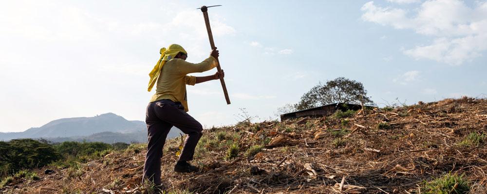 A farmer tills an arid field