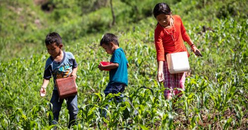 Three children sow seeds in a field in rural Guatemala