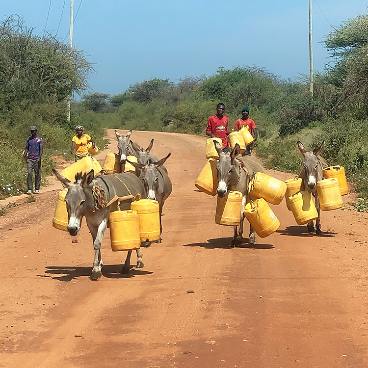 Four young people and their donkeys walking to fetch water on a road near Kishushe, Kenya